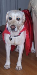 Duke, the super dog.